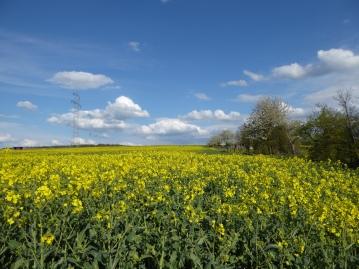 European Countryside in spring